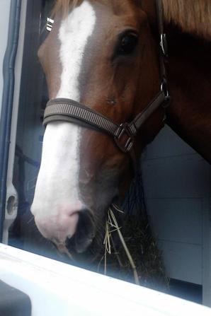 un des chevaux de Madame L'ange