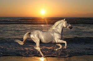 chevaux au soleil couchent ^^