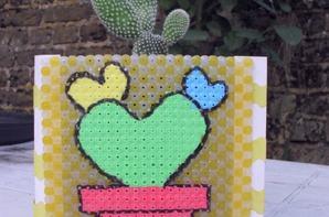 nouveau cactus , nouveau cache pot