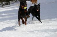 Les filles à la neige