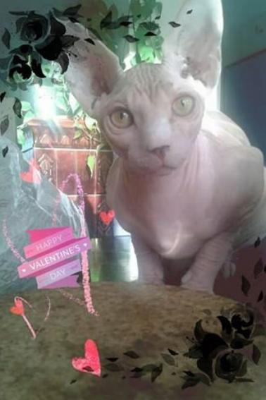 mon chat Igor