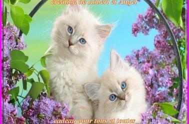cadeaux de Robert et Angel, catégorie chats !