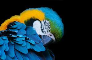 Quelqu'une de mes photos d'animaux :)