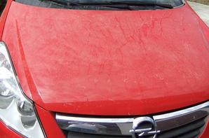 La calamité du pollen des pins en Gironde tous les ans!