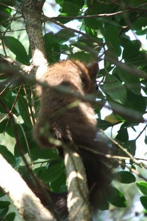 Un petit écureuil de mon jardin!