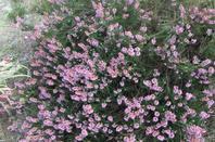 Quelques photos: fleurs du jardin!