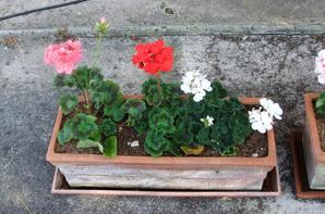 Dans ma jardinière!