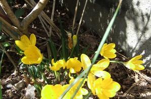 Encore quelques fleurs au jardin!
