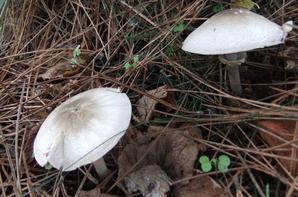 Quelques champignons dans mon jardin!