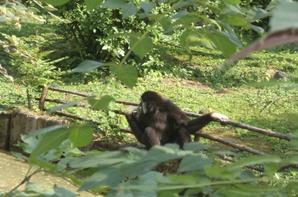 au zoo de lille