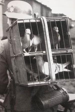 Déja très utile nos pigeons