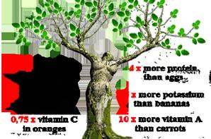 L'arbre de vie. .. II