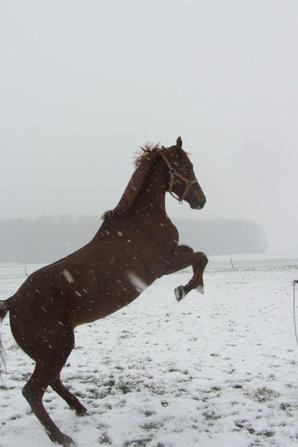 Début 2013 - neige.