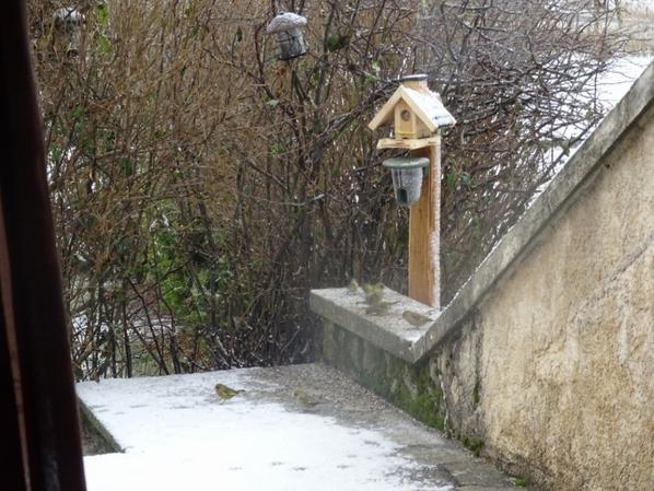 Mon paradis à oiseaux ^^