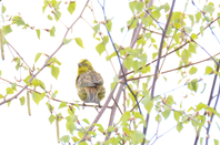 quelques photos de la faune norvegienne et une femelle eumo au nid