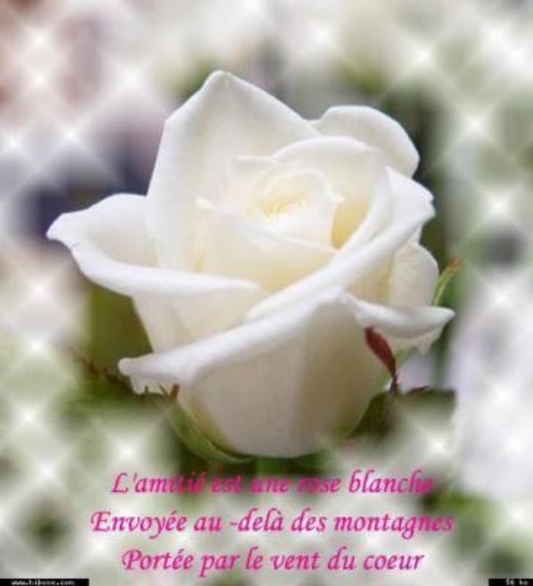 Citations Pour Toi Franchisse Amitier Amour Blog