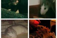 Meine 5 Ratten Jungs <3