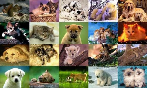 et plein d'autres animaux