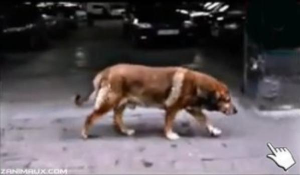 Faites confiance à vos animaux,aimez-les, ils vous donnerons toujours quelque chose en échange...