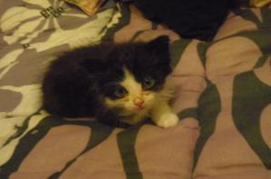 mon petit chaton que j'aime tellement