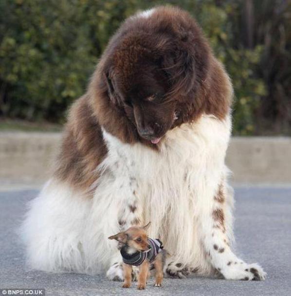 Il n'y a Pas de Mauvais chiens, Seulement de Mauvais Maîtres*