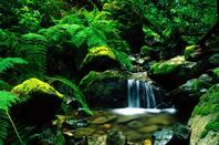 ◆◇°Esprit de la nature_________________   La nature cette source de grande sagesse où ses enseignements sont des trésors inestimables,nous apprennant les lois des équilibres à respecter et nous insuffle toute la vie qu'elle a en ses entrailles,l'absence de bruit urbain rien que le silence qui nous transcendande de mélodie enchanté,le bruit des feuilles se caressant l'une sur l'autre à chaque mouvement répété,le timbre presque inodible du passage des fourmis à chaque récolte terminé,le son des cascades et des rivières apaisante et rafraîchissante à la fois,l'odeur de la terre fraîche et parfumée à chaque mâtiné jusqu'au soir au rythme de nos émois,cette une beautée aux regard mais sa réelle existence est un élixir nourrissant  pour l'âme,toute la pression parasitant notre esprit s'envole prématurément dans son énergie élévatrice,nous faisant perdre toute notion du temp par sa vertu protectrice,les lois de la nature sont claires et à la fois secrètes,son lien avec l'homme est invisible et magique pour une combinaison riche et énergétique,l'être humain l'habitant habité d'une partie d'elle-même étant le résultat d'un tout et de ce qui constitue la vie,le cycle de toute une existence dans cette nature qui a encore tant à nous dire...
