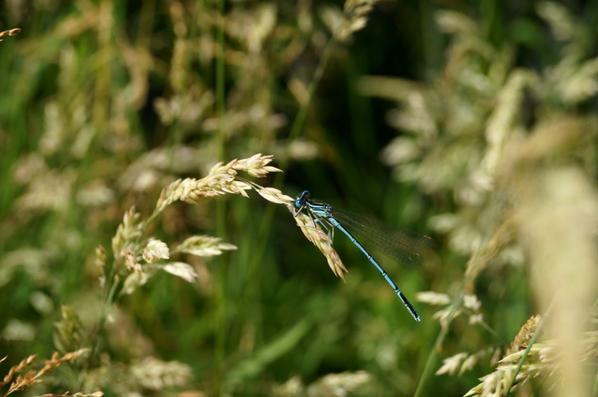 Photos nature!