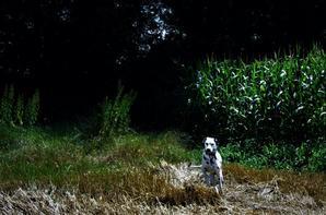 Dans le champ de maïs...mon Titi...