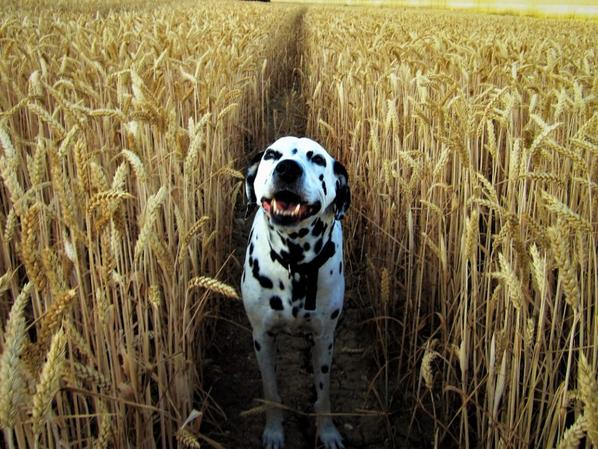 Regarder moi se beau sourire....