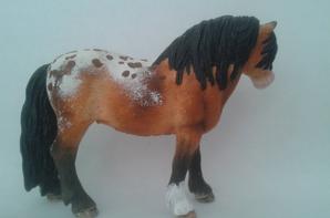 Swaïa du Foal