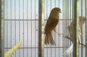 brun jaune intensif porteur ino (phaeo) 2013