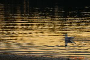 Fin d' après midi sur le lac ( Hossegor)