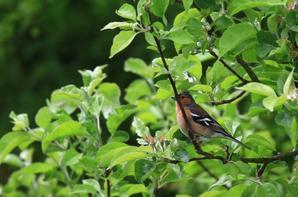 Quelques photos prises dans mon jardin à Piriac