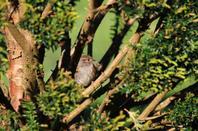 Photos de nature  Piriacaise