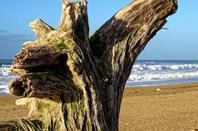 Promenade sur la plage à la recherhe de la bête...........