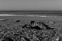 Après les vagues...........