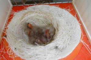 Les premiers nés sont d' hier vendredi 15 avril