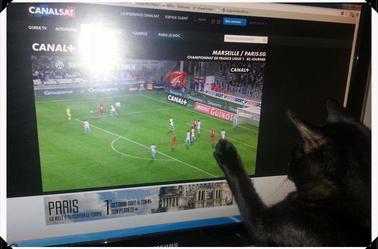 Les chats :)