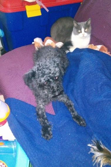 Nos chiennes passé chez le coiffeur