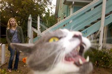 ChatBoule et ses potes photobombinger (ou l'art de faire foirer une photo)!!!!!