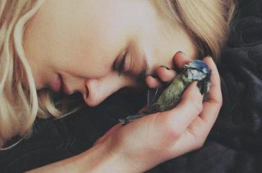 Oiseau Malin