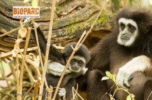 Bioparc - Zoo de Doué-la-Fontaine