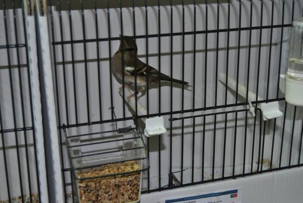 Visita ao Campeonato Nacional de Ornitologia em Guimarães