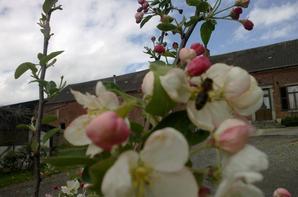 nos petites abeilles ont du travail!