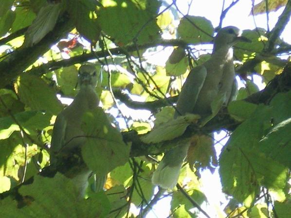 PETITE DECO au crochet et tourterelles nées dans nos arbres, 2 fois 2!