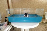 Nouvelle cage pour une nouvelle vie !