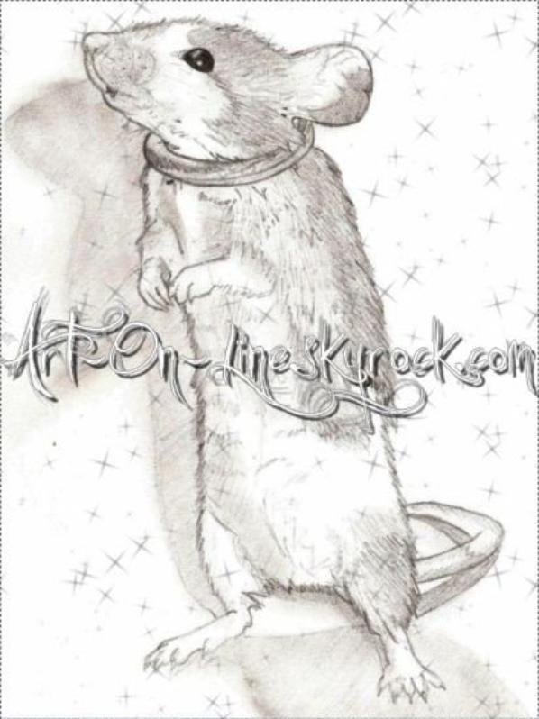 Dessin au crayon à papier de ma petite souris Caline