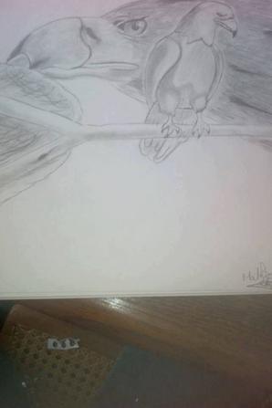 Aperçu de quelque uns de mes dessins