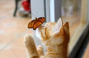 Chat et papillon ^^