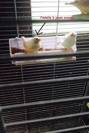 Les jeunes de la cage 2